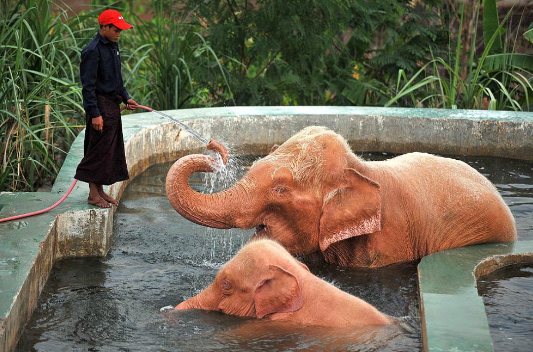 rose_elephant-2.jpg