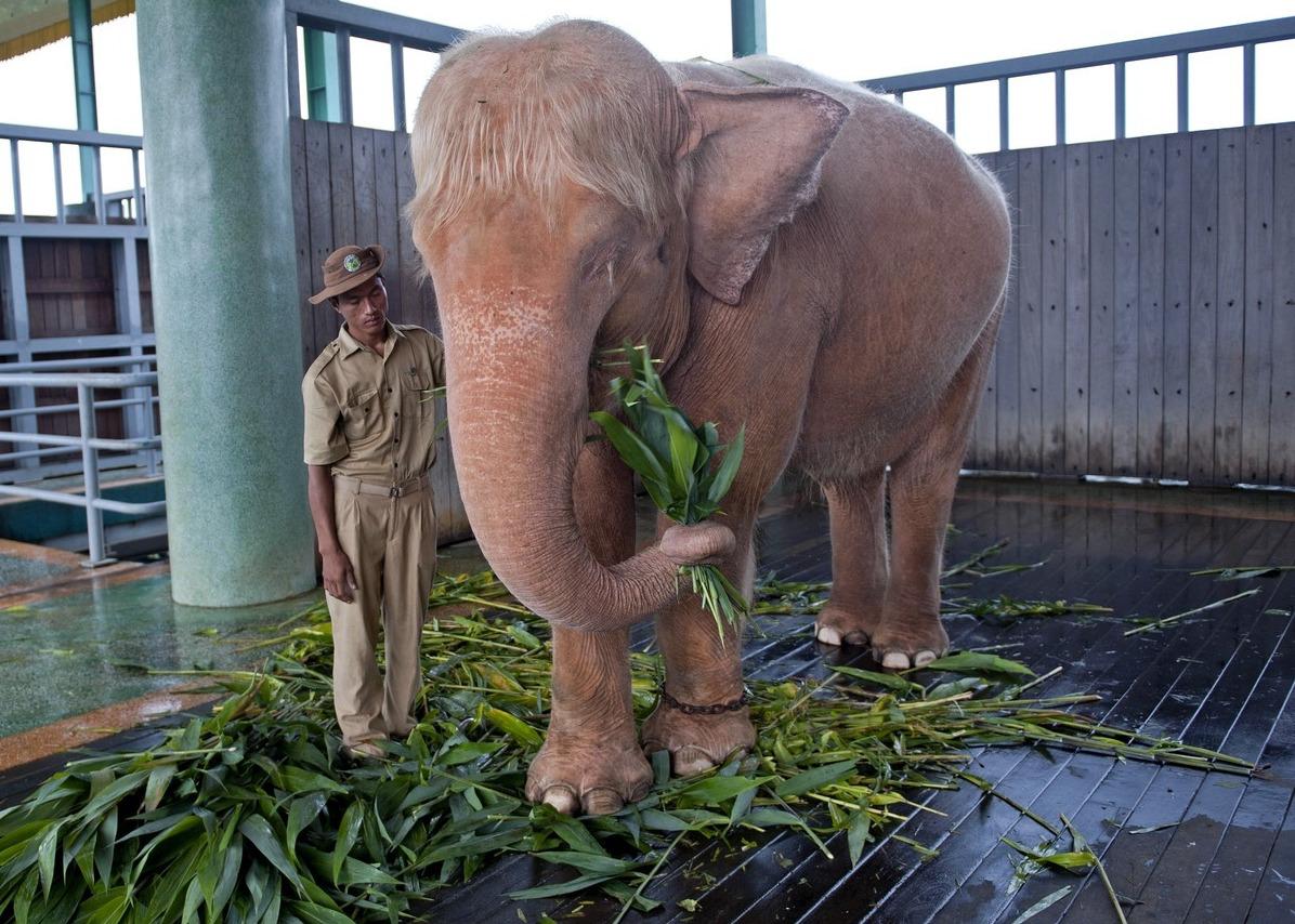 rose_elephant.jpg