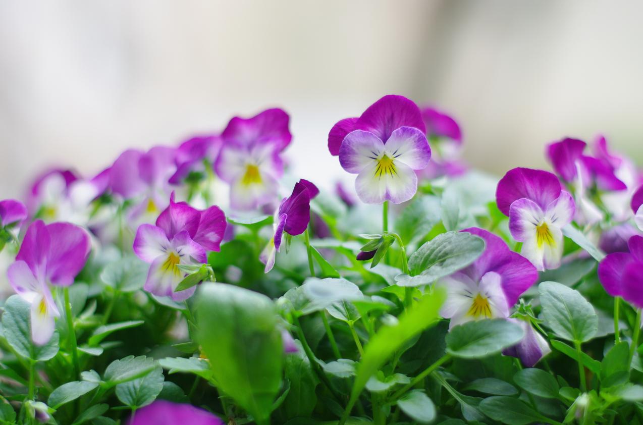 spring-42.jpg