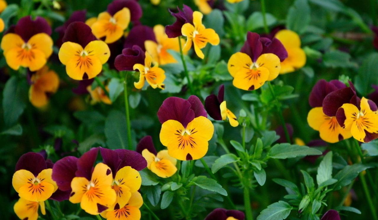 spring-43.jpg
