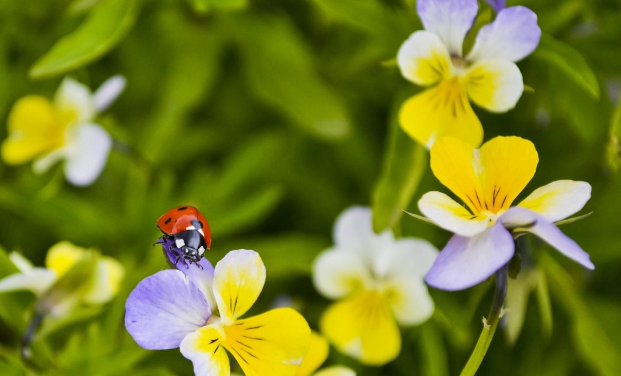 spring-45.jpg