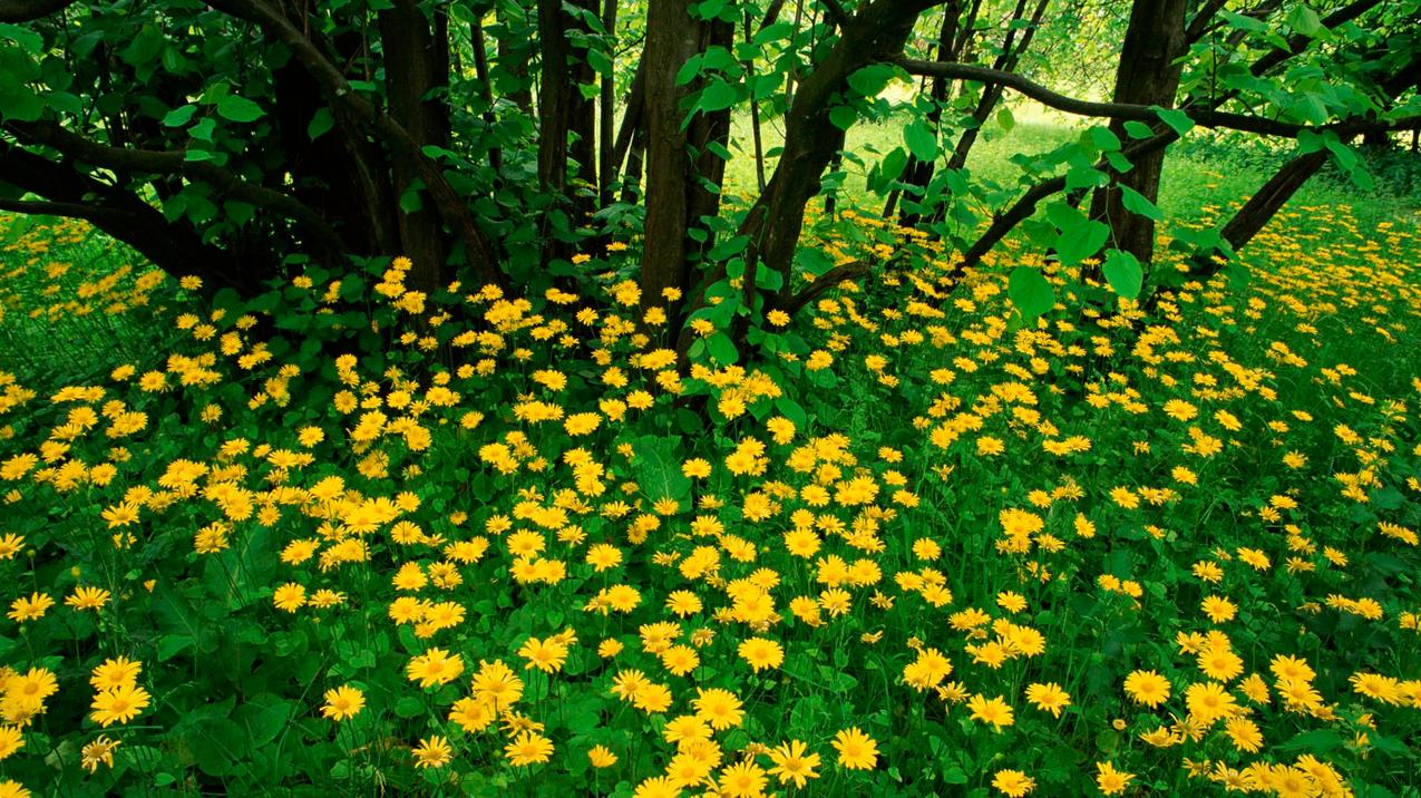 spring-46.jpg