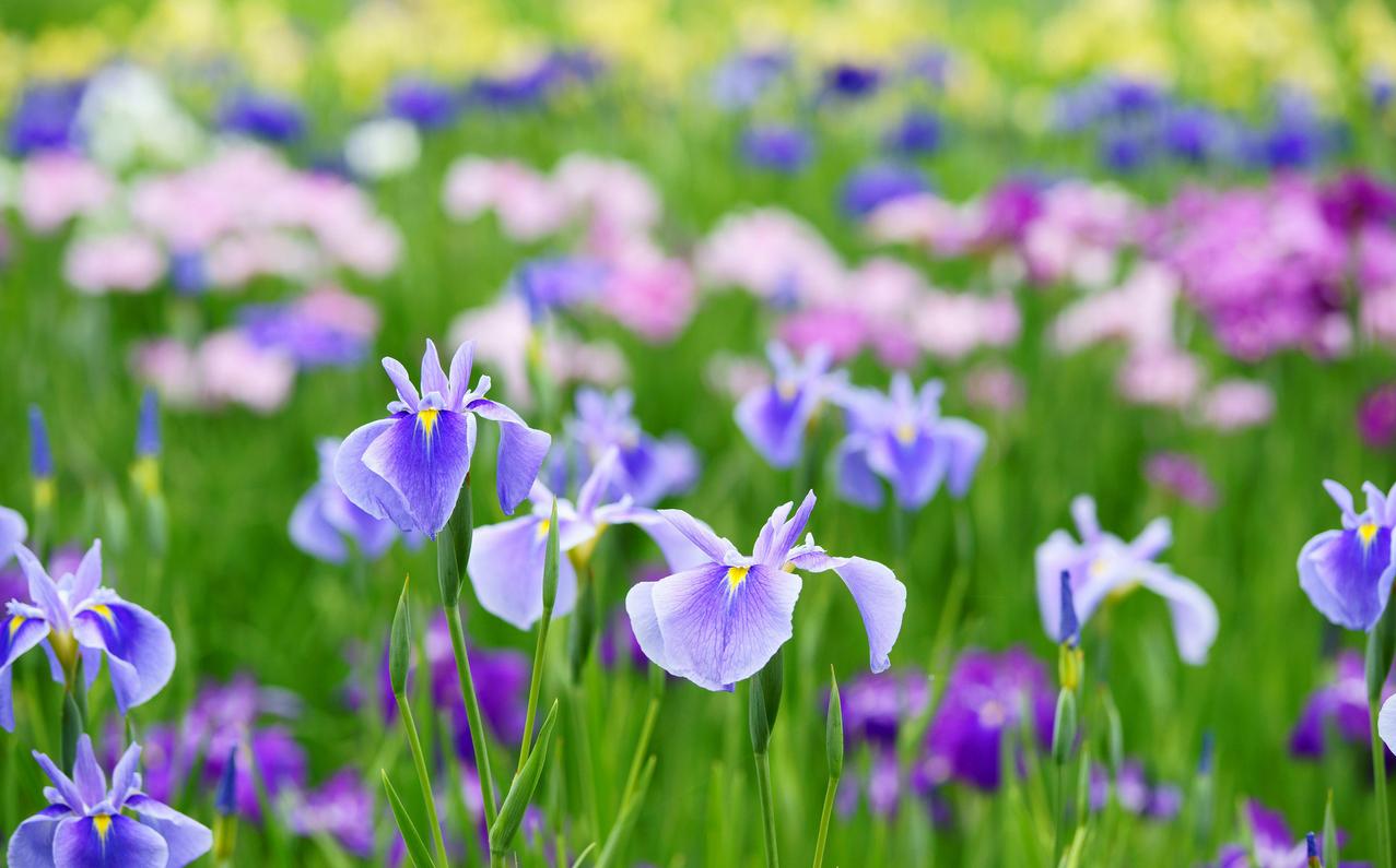 spring-47.jpg