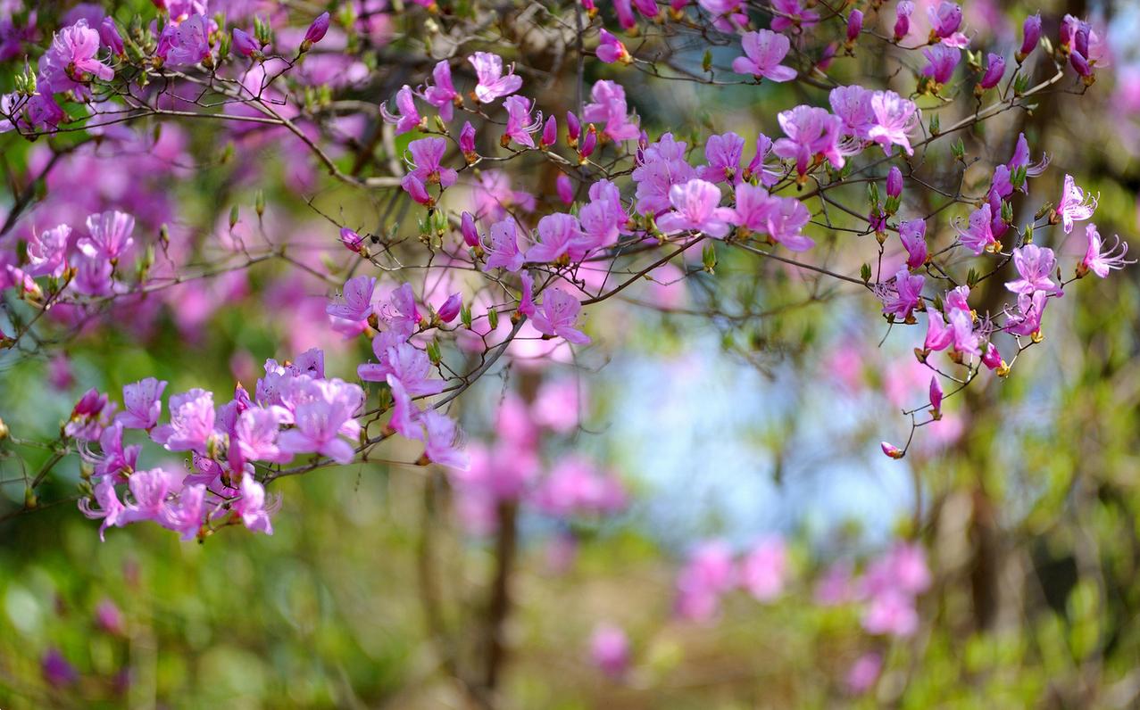 spring-61.jpg
