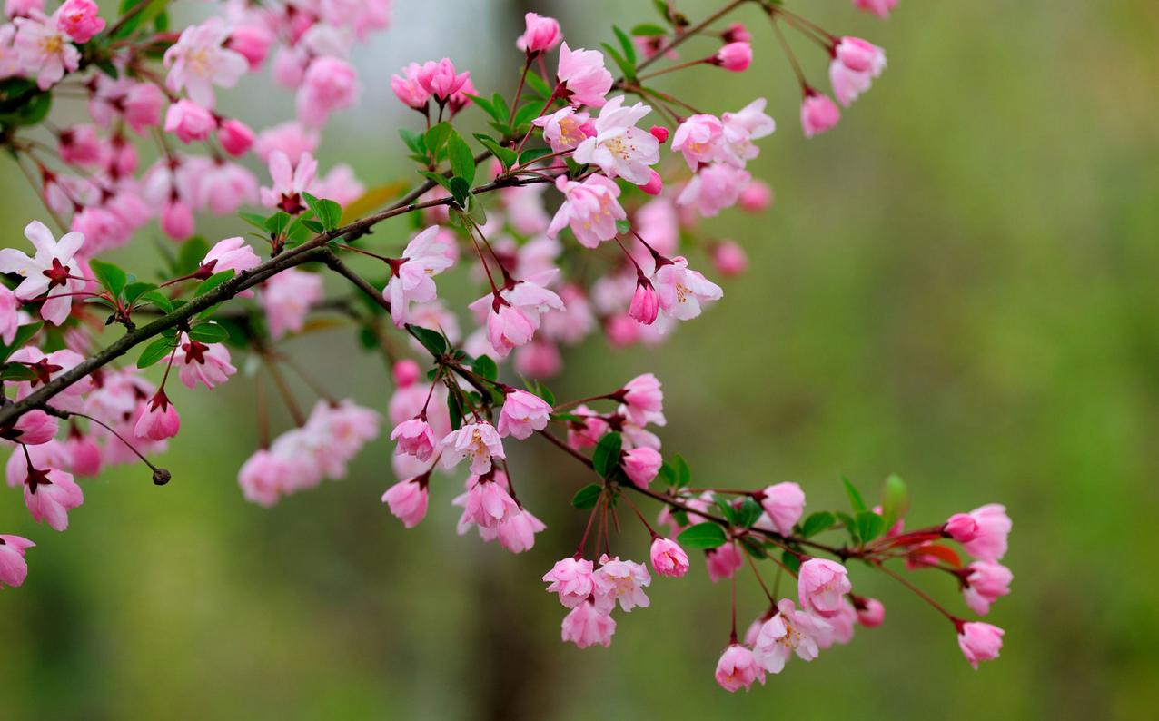 spring-62.jpg