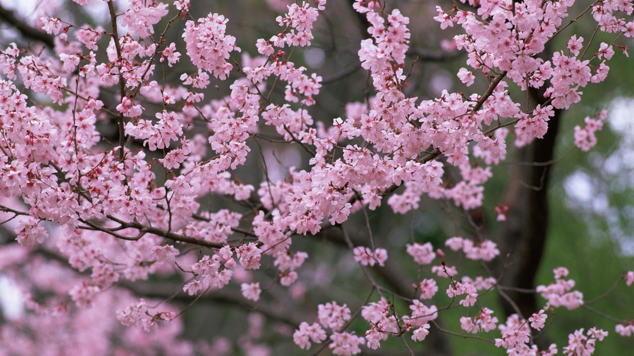 spring-63.jpg