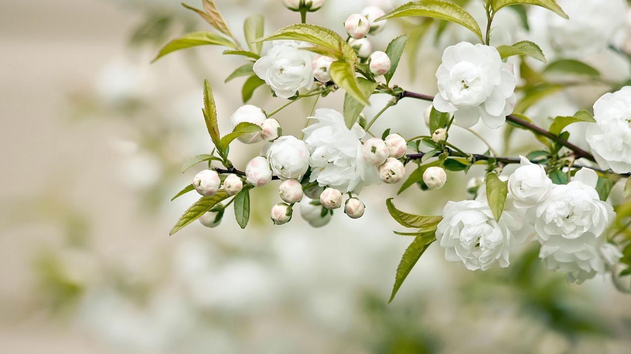 spring-65.jpg