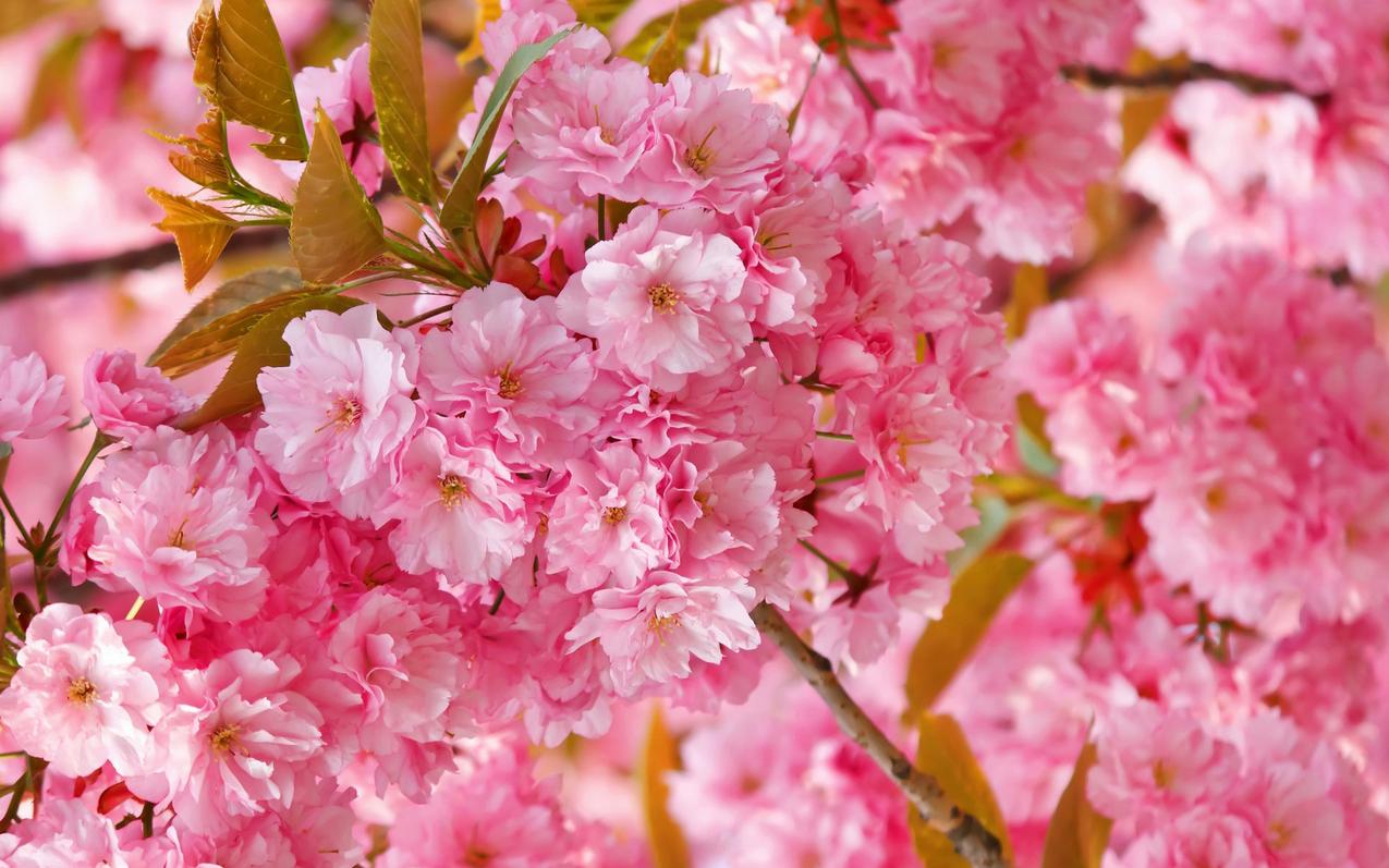spring-66.jpg