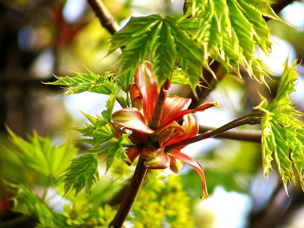 spring-68.jpg