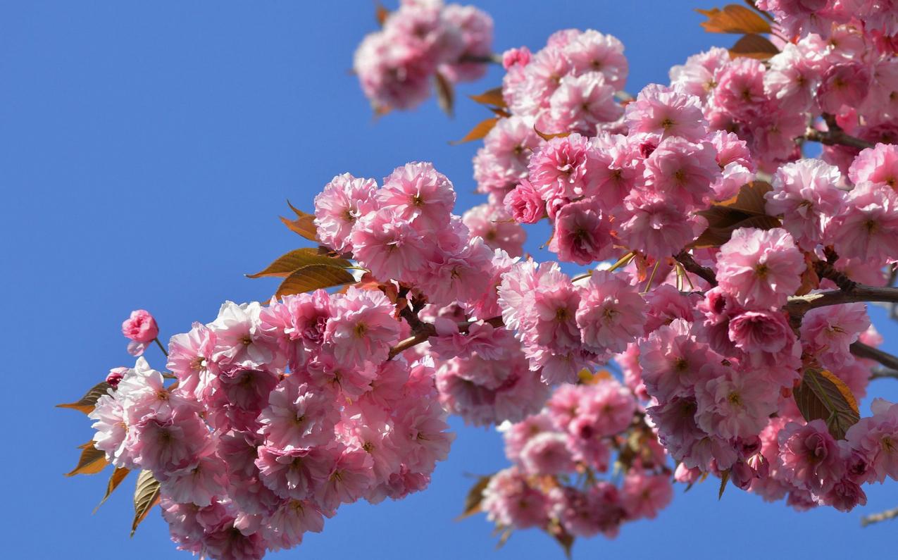 spring-69.jpg