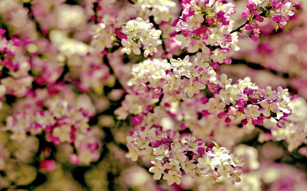 spring-70.jpg