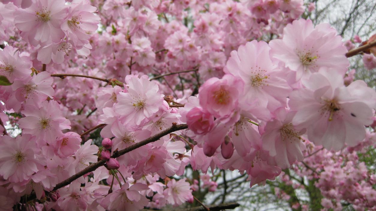spring-71.jpg