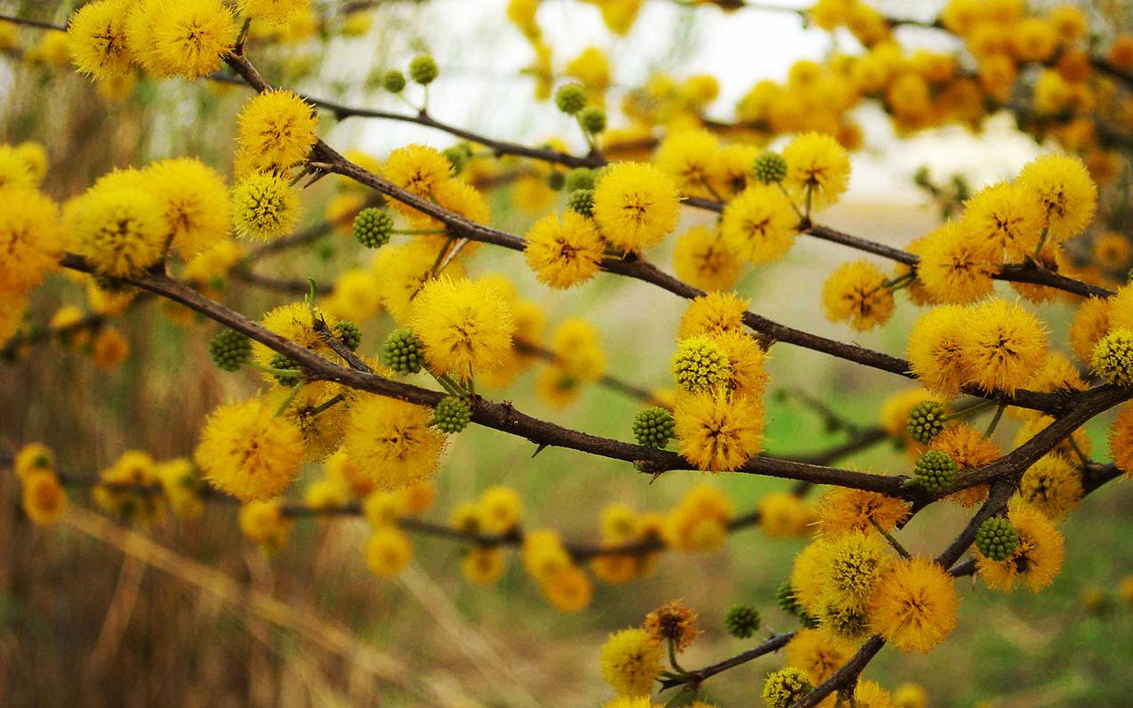 spring-72.jpg