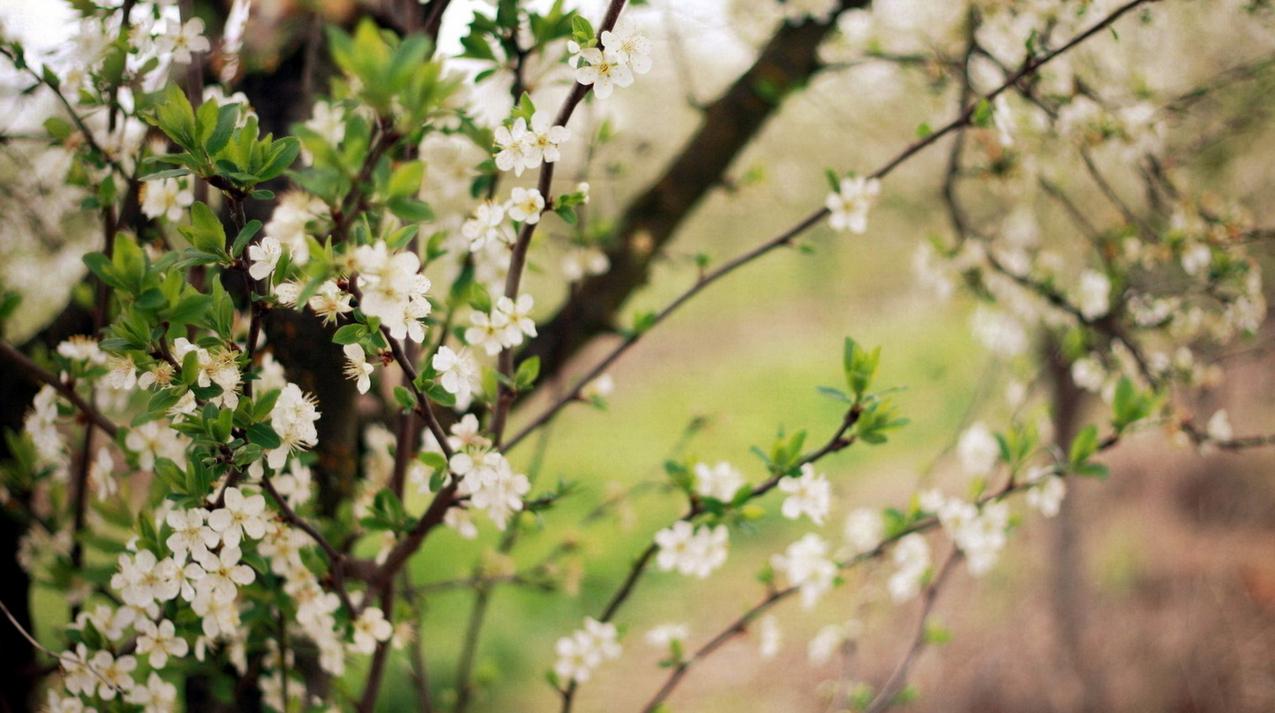 spring-73.jpg
