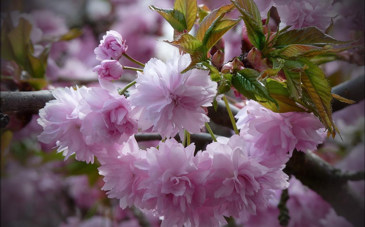 spring-74.jpg