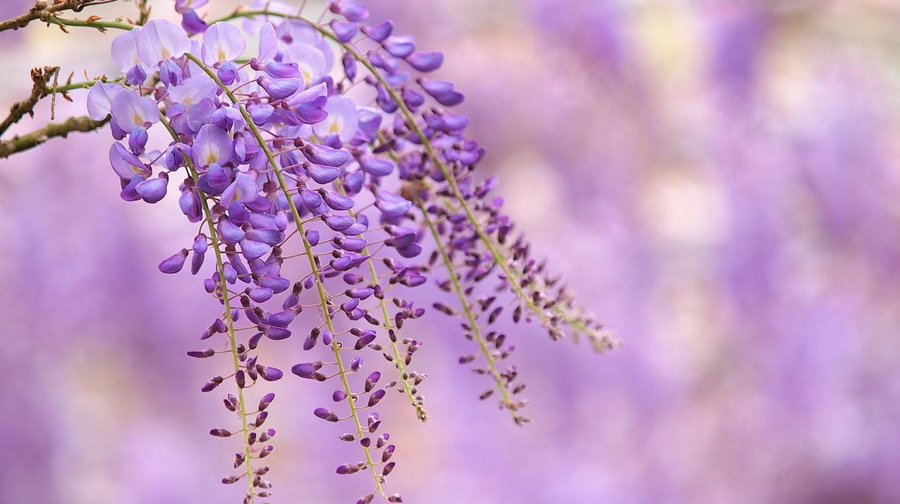 spring-75.jpg